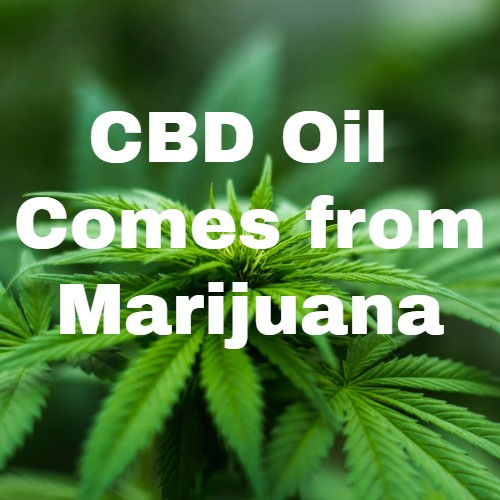 CBD DOES NOT GET YOU HIGH!